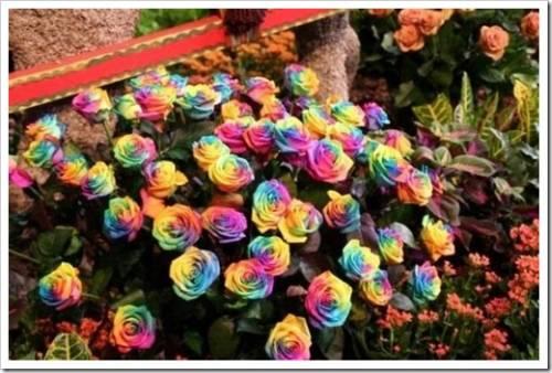 Преимущества Интернет-бутиков свежих цветов