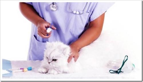 Препараты, которые применяются для вакцинации