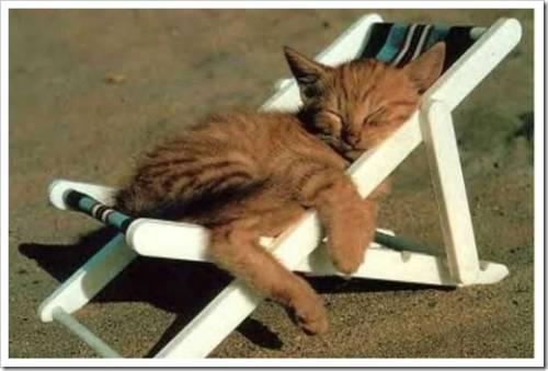 Можно ли худеть на отдыхе
