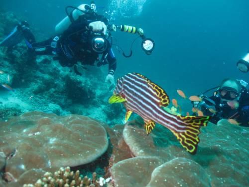 выбрать подводный фотоаппарат