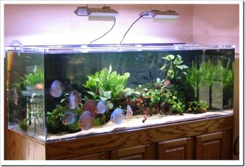 Как выбрать аквариум в квартиру?