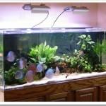 выбрать аквариум в квартиру?