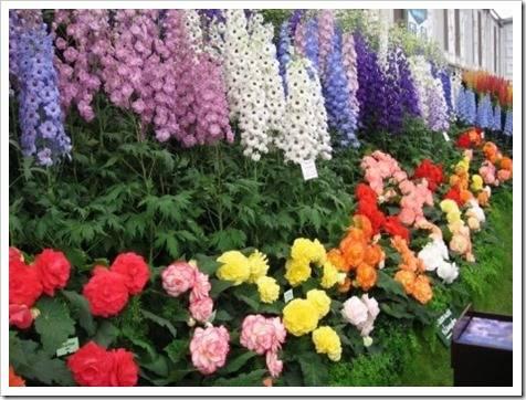 Классификация многолетних растений по способу размножения