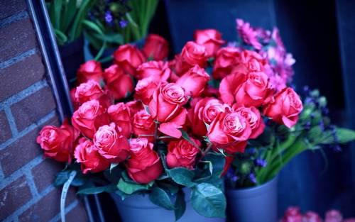 Как выбрать качественную розу