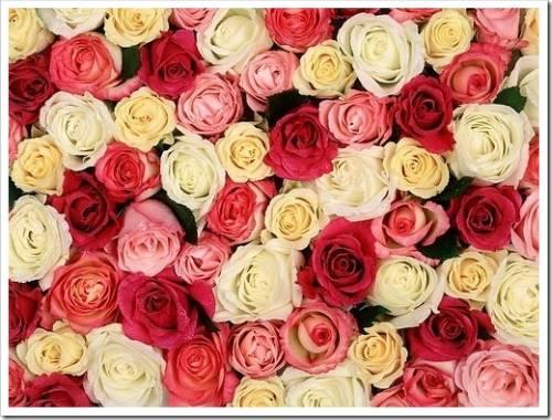 Цветы для любимых на 14 февраля