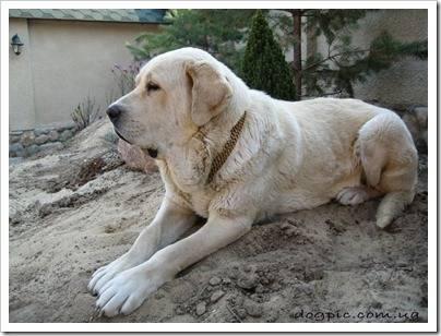 Собака, которая выживет в российском климате