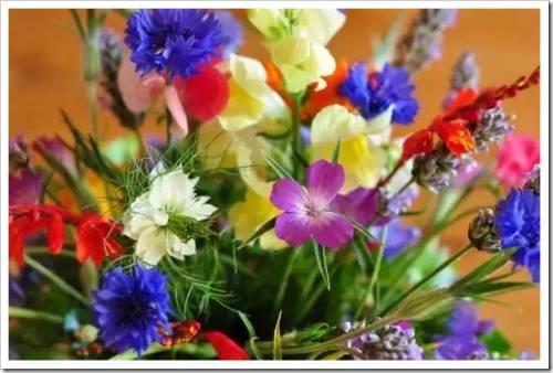 На что следует обращать внимание, чтобы выявить свежесть цветов?