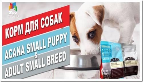 Популярные продукты Acana для собак