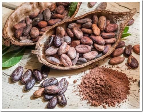 Какао-бобы и шоколад: всё, что вы хотели знать.