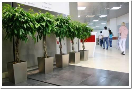 Как сделать озеленение офиса