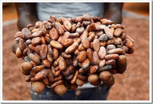 Чем какао так полезно для человека?